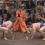Монголец спря победния ход на Даниел Иванов – Аоияма в Осака
