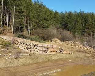 Злоупотреба за хиляди: Шефът на Горското стопанство в Елин Пелин завишил цени за сеч в района