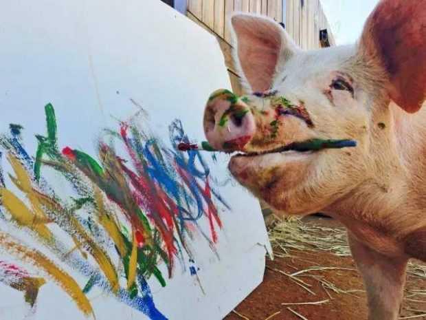 Запознайте се с Пигкасо – свинята художник от Южна Африка