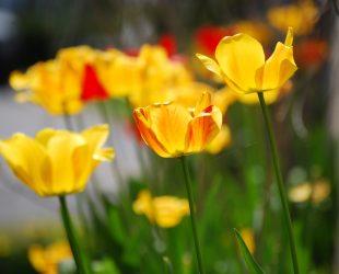 Астрономическата пролет ще настъпи на 20 март в 23:58 часа