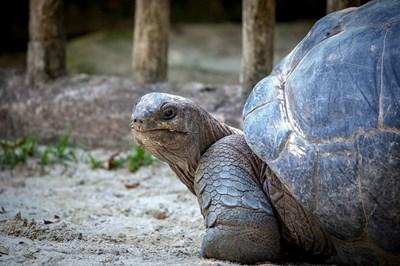 Зоопаркът в Лима отбеляза Международния ден на костенурките
