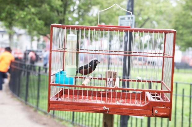 """Състезание по """"надпяване"""" на птици в Сингапур"""