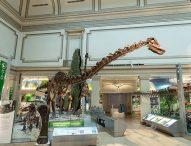 """Музеят """"Смитсониън"""" представя уникална изложба на вкаменелости на милиони години"""