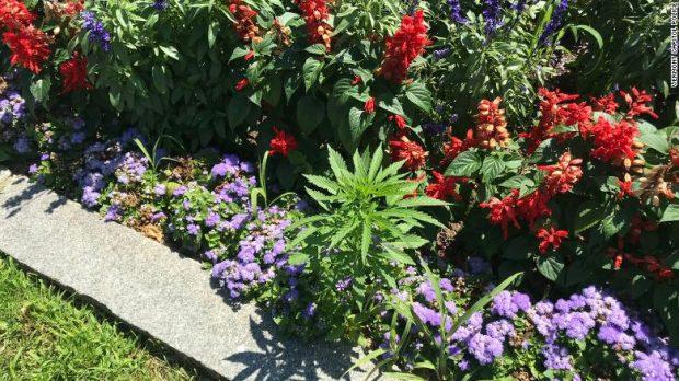 Откриха канабис в цветните лехи пред Законодателното събрание на щата Върмонт