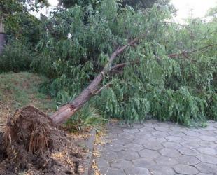 Екипите на Столична община са реагирали на над 60 сигнала за щети след бурята в събота