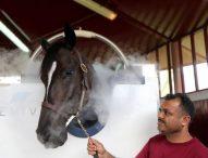 В Дубай прилагат криотерапия на състезателни коне