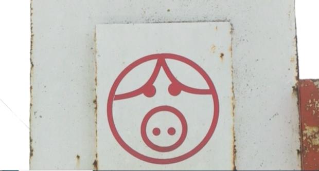 БАБХ-Пазарджик започна проверки за домашните прасета в стопанствата в региона