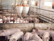 БАБХ: България вече може да изнася свинско месо на европейския пазар