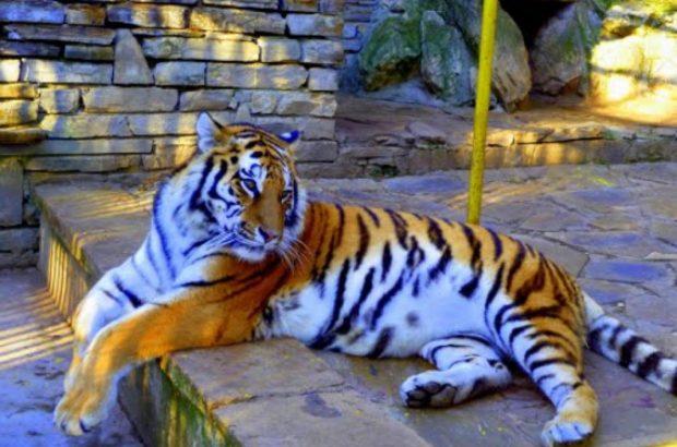 Започва цялостно обновяване на Зоопарка в Стара Загора
