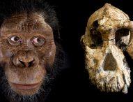 Палеонтолози откриха пълен череп на древен прародител на човека
