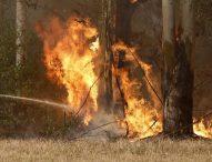 Пожарите в Австралия достигнаха предградията на Сидни