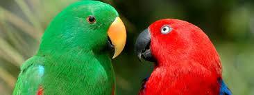 Изложба на папагали показва 30 екзотични птици от 3 континента във Варна