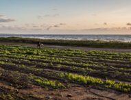 Шотландски фермери отглеждат гурме култури, използвайки морска вода