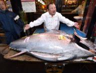 Рекордна цена за риба тон на прочутия рибен пазар в Токио
