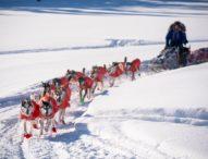 """Десетки ентусиасти се включиха в най-екстремното състезание с кучешки впрягове в света """"Идитарод"""""""