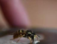 Руски творец създава миниатюрни маски за насекоми на фона на пандемията от COVID-19