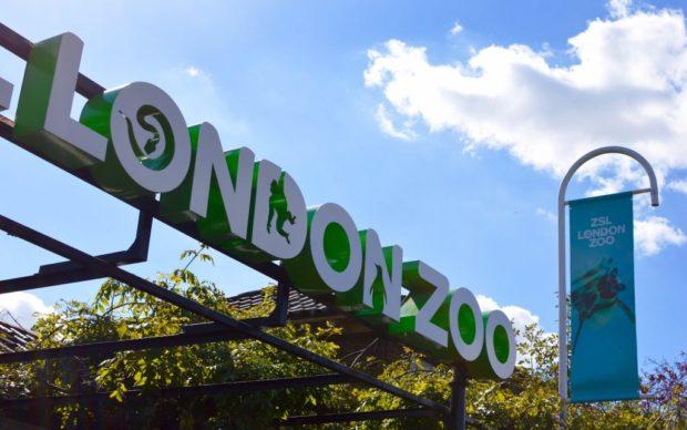COVID-19: Зоопаркът в Лондон отново отваря за посетители