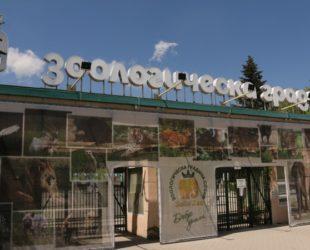 Столичният зоопарк събра хиляди малки и пораснали деца на 1 юни