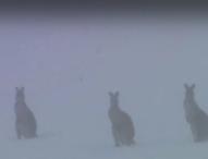 Сняг валя в Югоизточна Австралия, снеговалежи имаше и в Бразилия