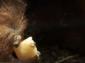 В летните жеги животните в римския зоопарк се разхлаждат с ледени лакомства