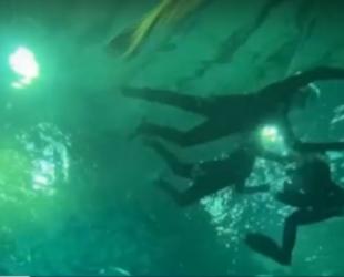 COVID-19: Най-големият аквариум в Рио де Жанейро отново отвори врати за посетители