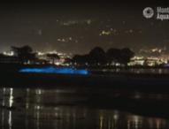 Красива гледка – биолуминисцентни вълни край бреговете на Калифорния