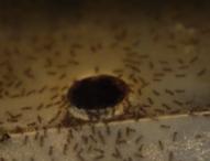 Фермите за мравки – хит в Сингапур