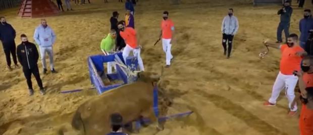 Бикоборци в Испания запалиха факли върху рогата на бик, организации поискаха спиране на коридата