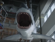 """Прочутата смъртоносна акула от филма """"Челюсти"""" в музей на киноизкуството в САЩ"""