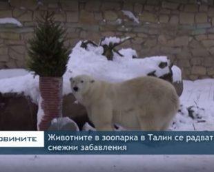 Животните в зоопарка в Талин се радват на снежни забавления
