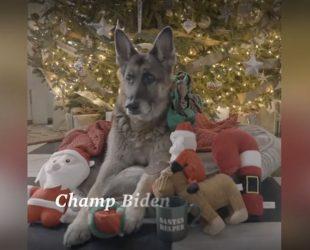В Белия дом отново ще се радват на домашни любимци – двете немски овчарки на семейство Байдън