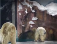 В Китай откриха първия в света хотел за полярни мечки