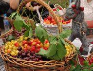 Стотици се събраха за Празника на черешата в Кюстендил
