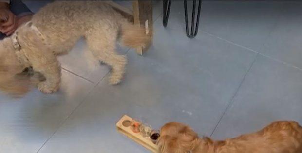 Кучешки бар в Лондон предлага коктейли и за домашните любимци, докато стопанина им е на питие