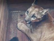 Близо 100 диви животни, попаднали в плен, бяха спасени от черния пазар в Колумбия