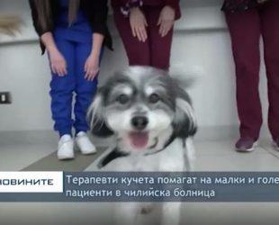 Терапевти кучета помагат на малки и големи пациенти в чилийска болница